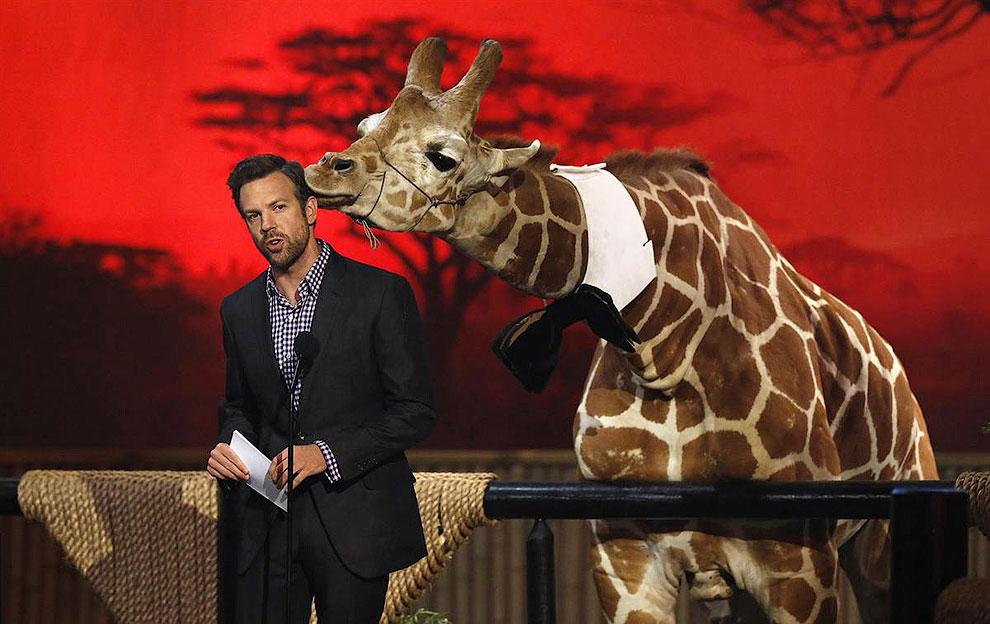 Американский актер, комик Джейсон Судейкис на телешоу с маленьким жирафом,  Калифорния