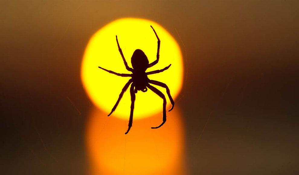 Силуэт паука на фоне заходящего солнца в Дрездене, Германия