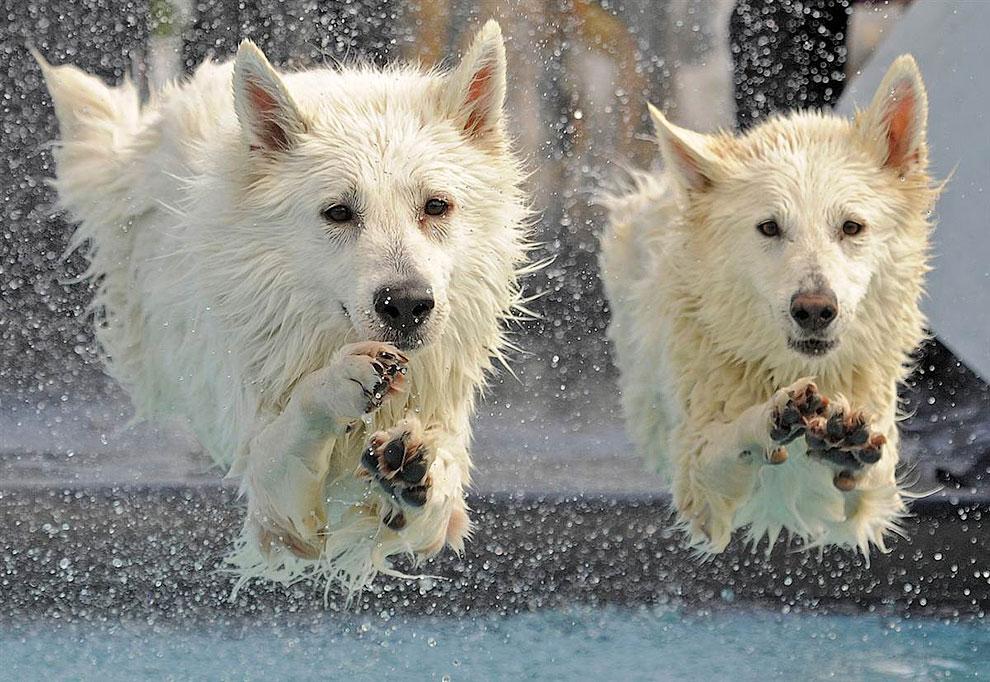 Фотография с выставки собак в Эрфурте, Германия