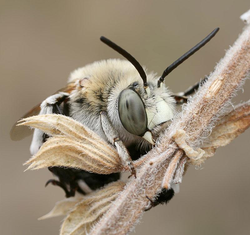 Как спят пчелы