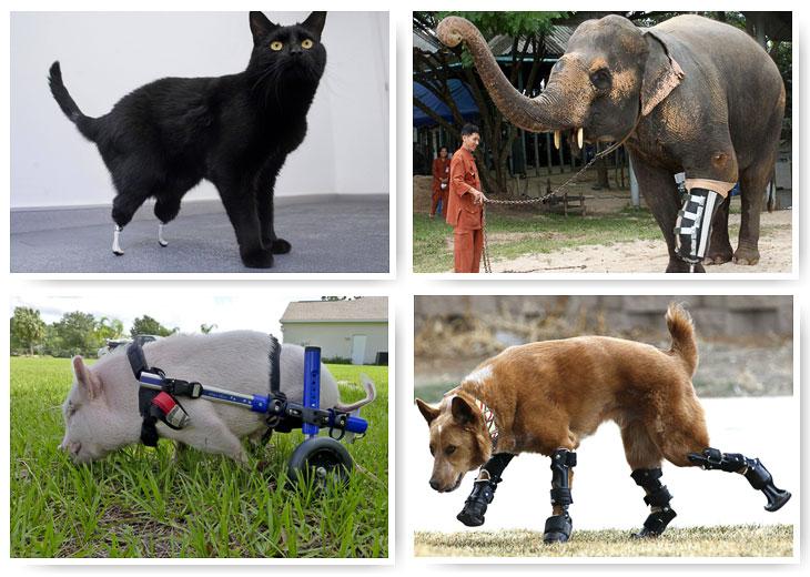 Движение без конечности: искусственные лапы и хвосты