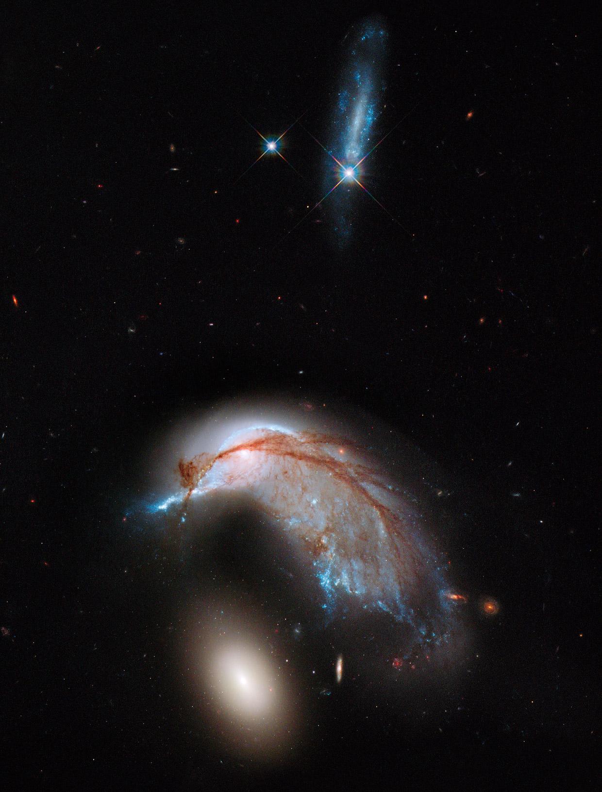 Галактика Морская свинья