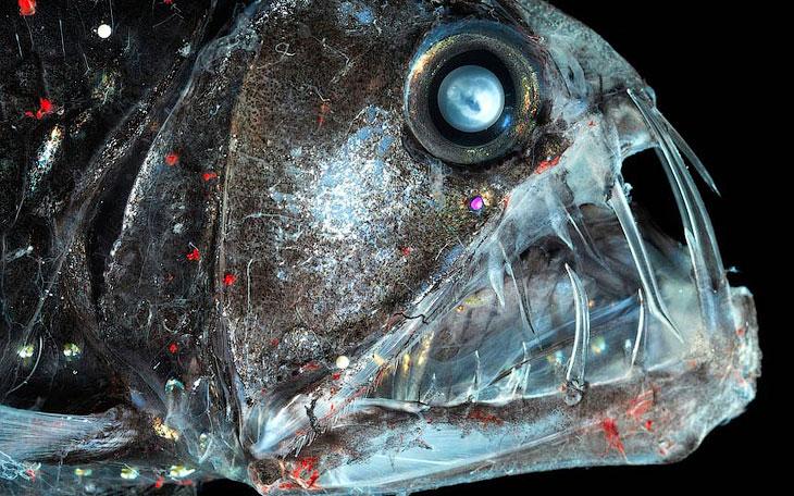 Найстрашніші в світі морські істоти