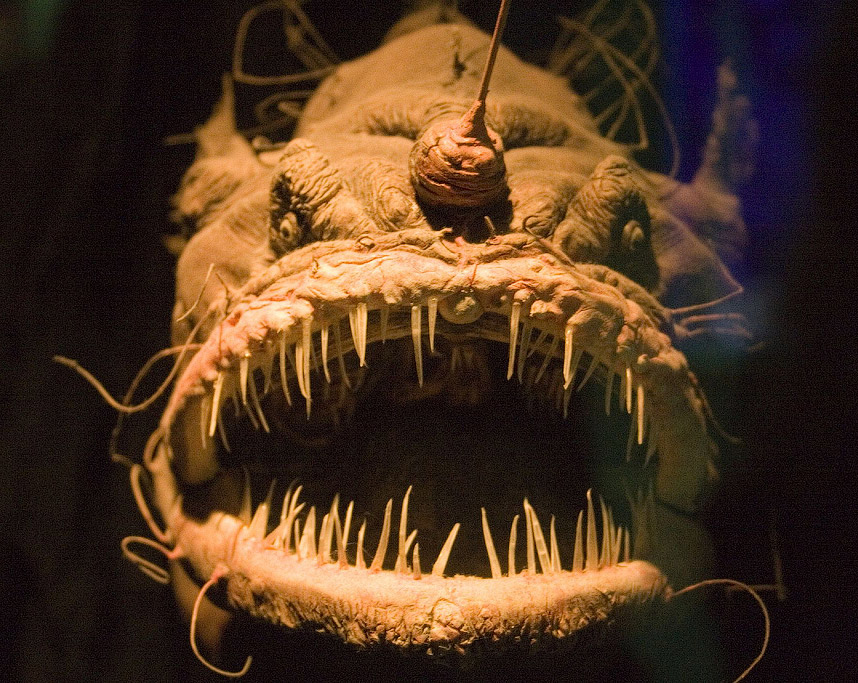 Хижа риба морський чорт або європейський морський чорт