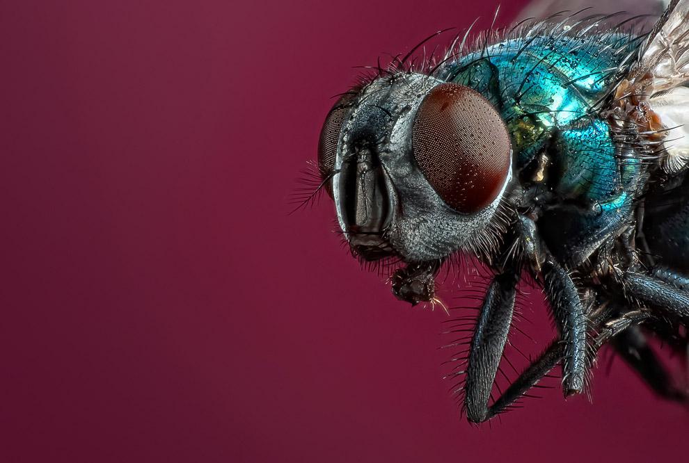 пауки россия фото
