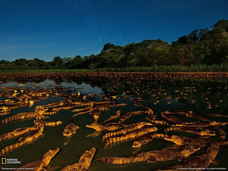 Кайманы ночью в Бразилии