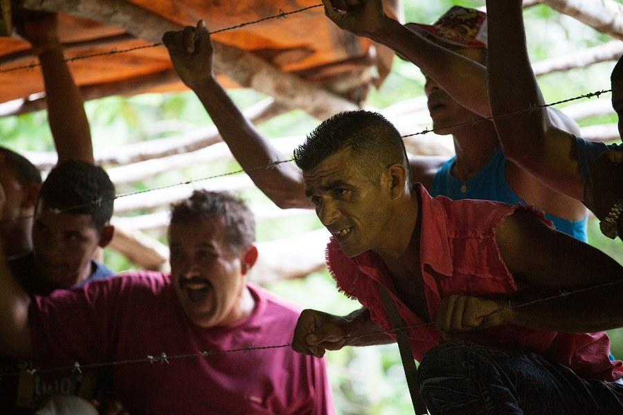 Петушиные бои на острове Свободы