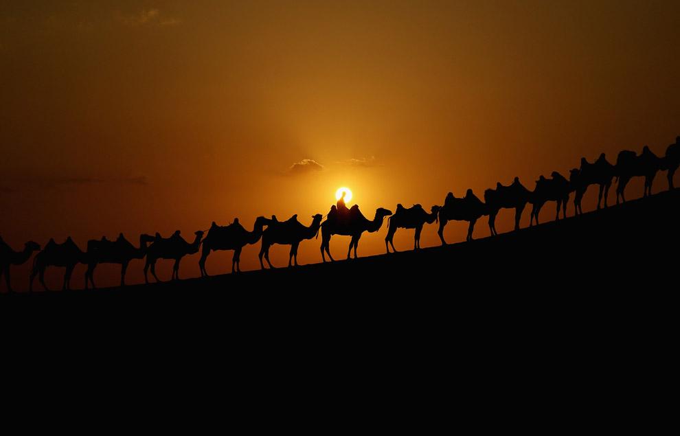 Караван верблюдов, пустыня Xiangshawan
