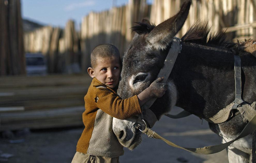 Мальчик со своим ослом