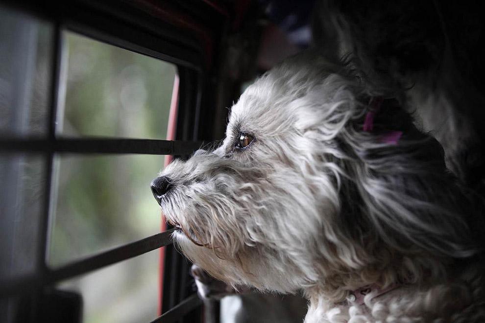 Собака смотрит из окна автомобиля на проплывающие мимо пейзажи, Мексика