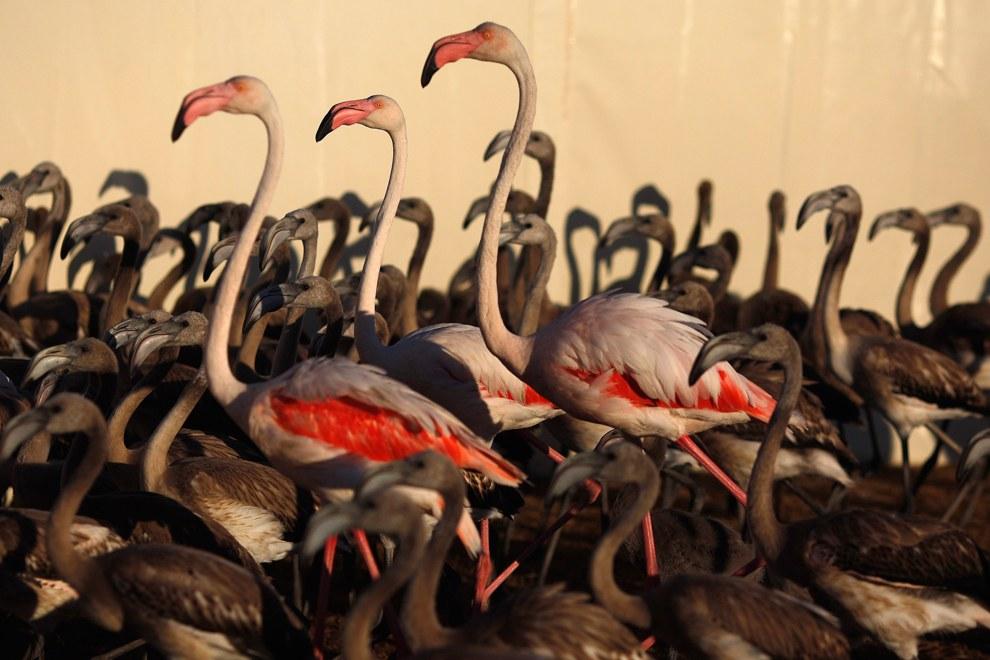 Фламинго на юге Испании
