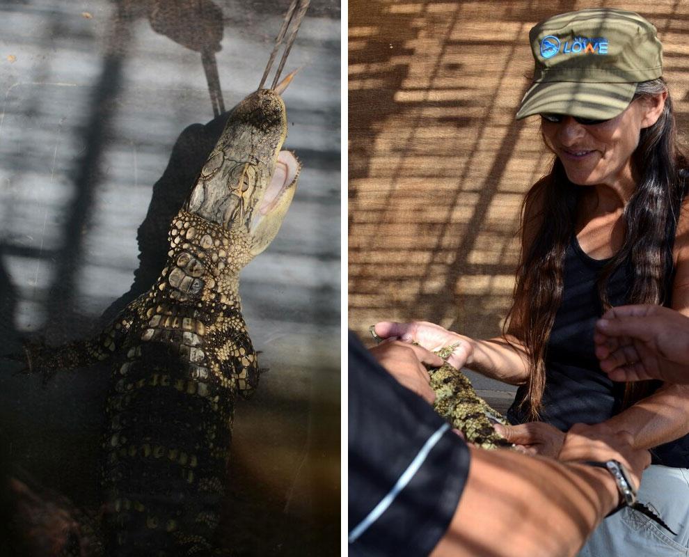 Здесь живут крокодилы...