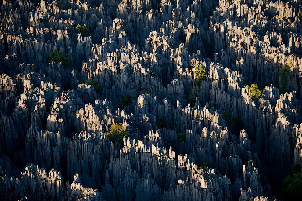 """""""Stone Forest"""" in Madagascar"""