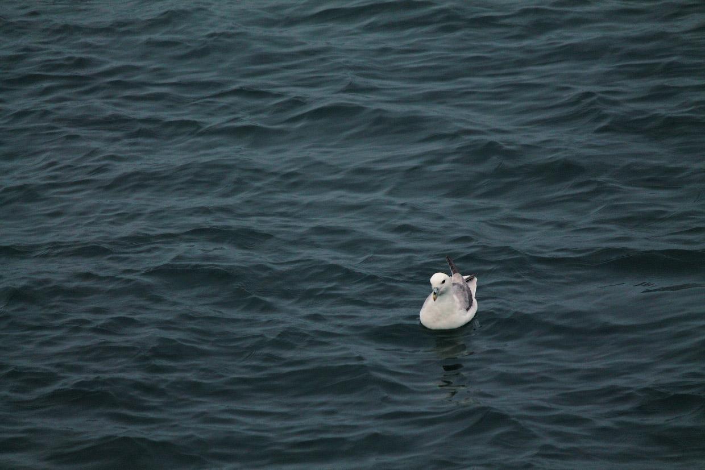 И в их ожидании слушать холодную Атлантику, не замечая пронизывающий ветер