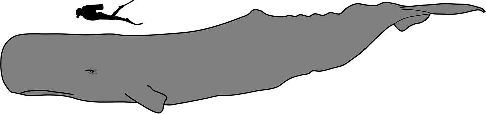 Кашалот