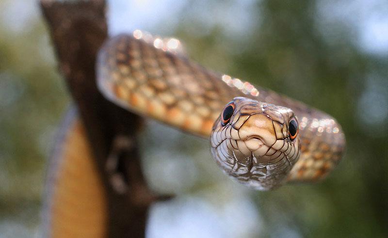 Рептилии Нижнего Поволжья