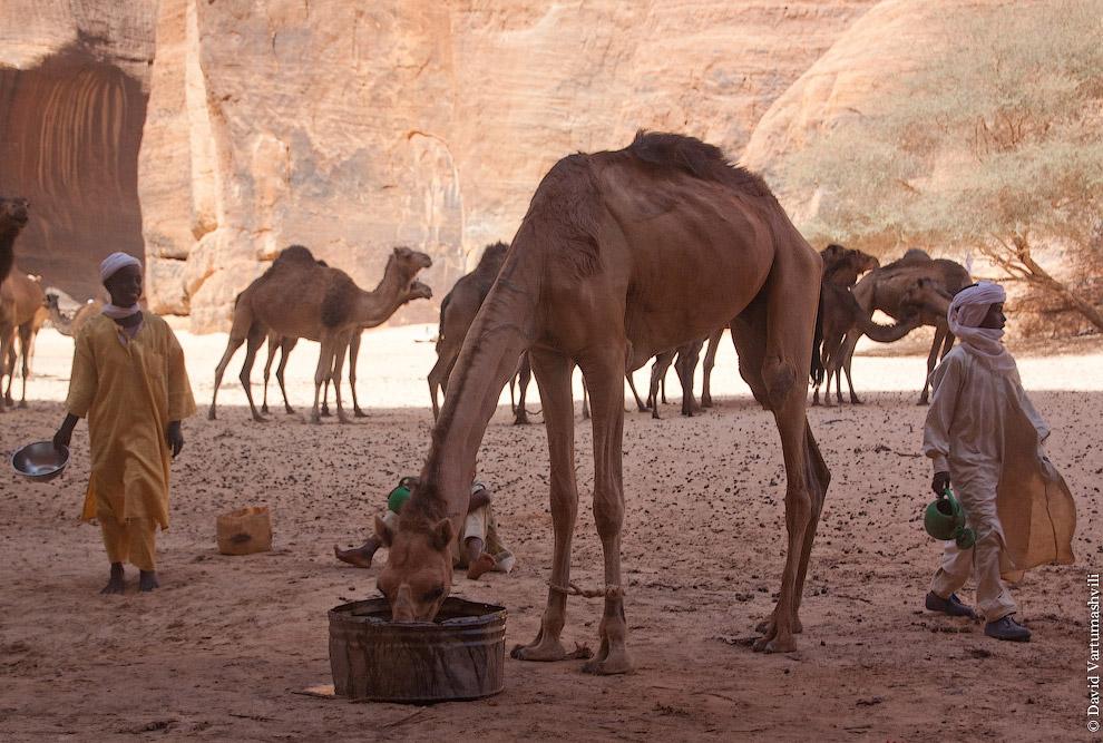 Гельта д'Аршей в пустыне Сахара