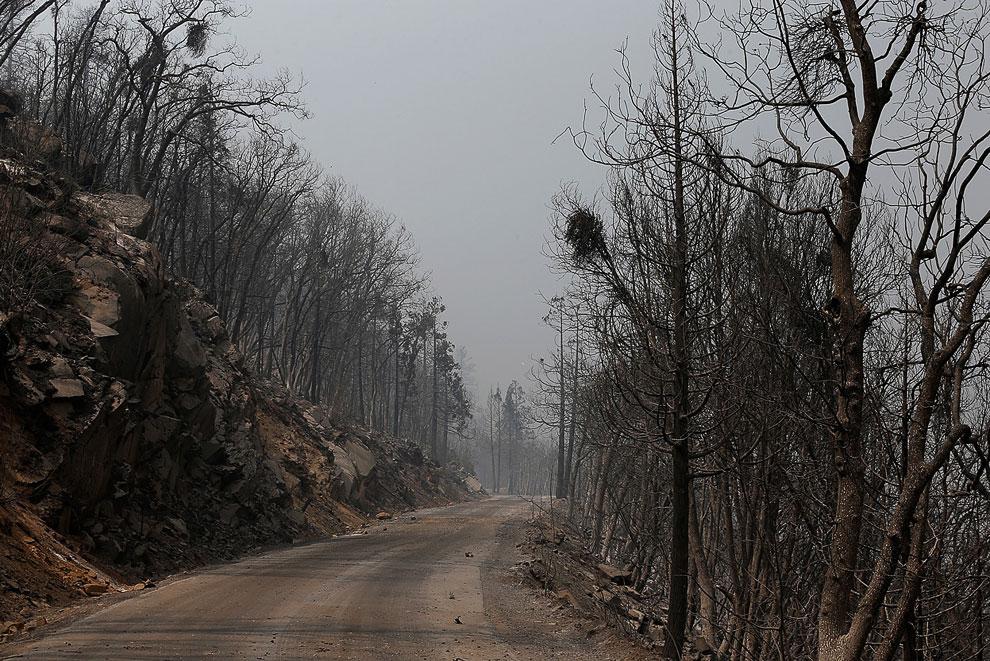 Мертвые деревья после прохода огня