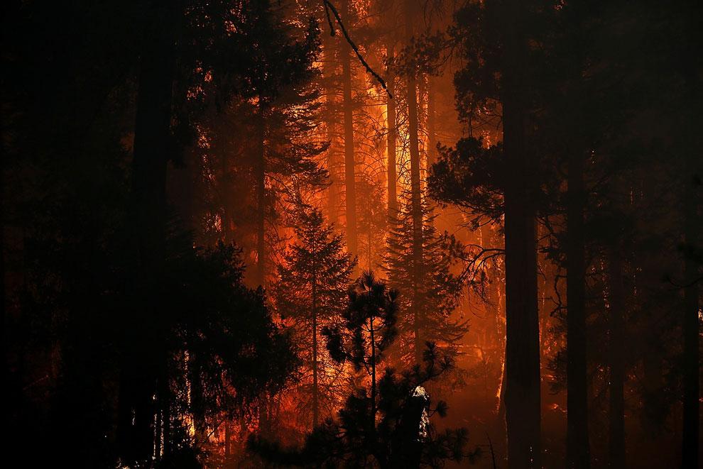 Пожар около знаменитого Йосемитского национального парка