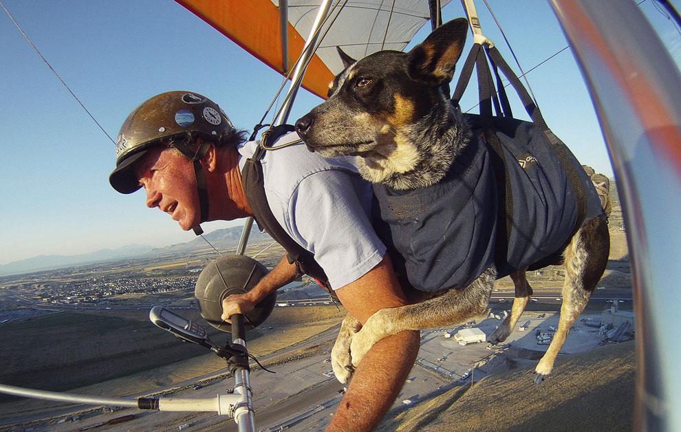 Солт-Лейк-Сити, штат Юта. Тренер по параглайдингу и дельтапланеризму с 37-летним стажем Дэн Макманус и его собака Шэдоу. Девять лет они летают вместе