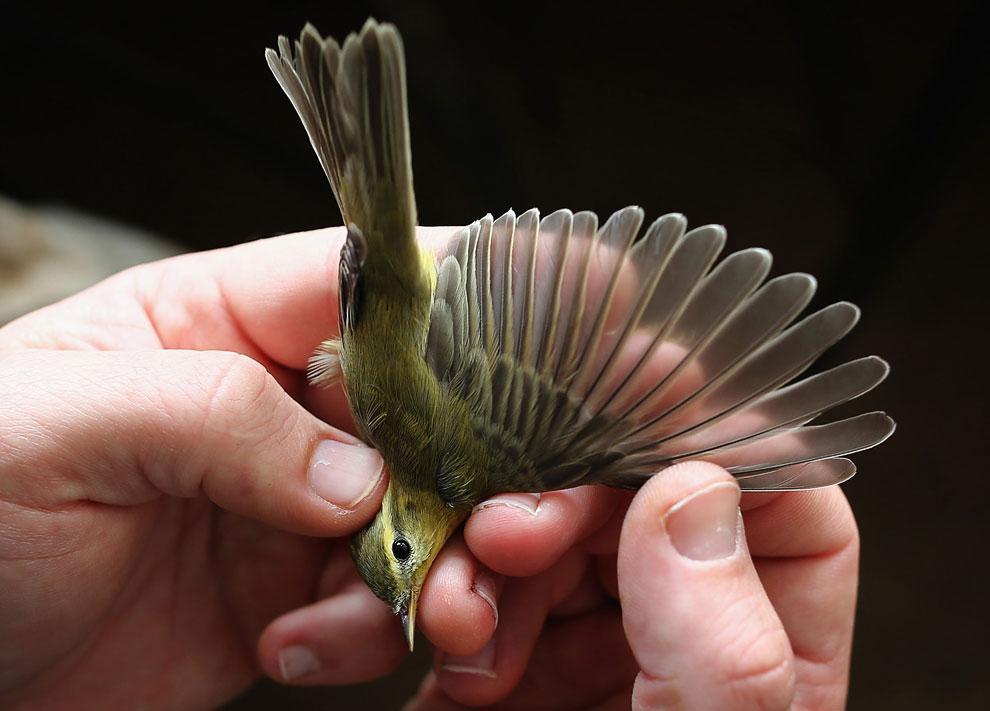 Заповедник, находящийся недалеко от побережья Восточном Суссексе — идеальная среда обитания для многих оседлых и перелетных птиц