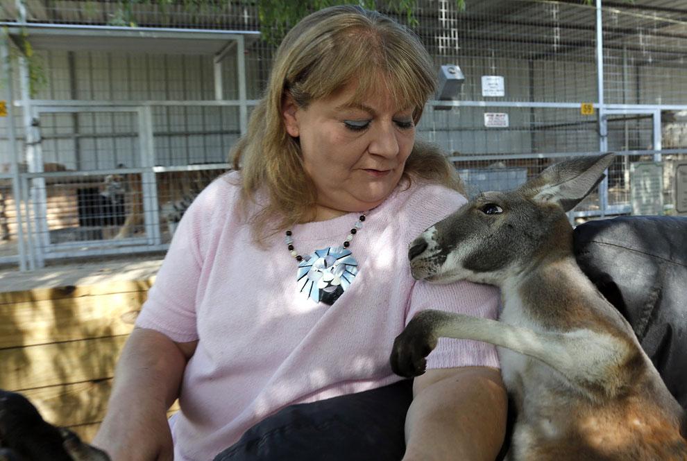 Этот кенгуру — резидент зоопарка в штате Оклахома
