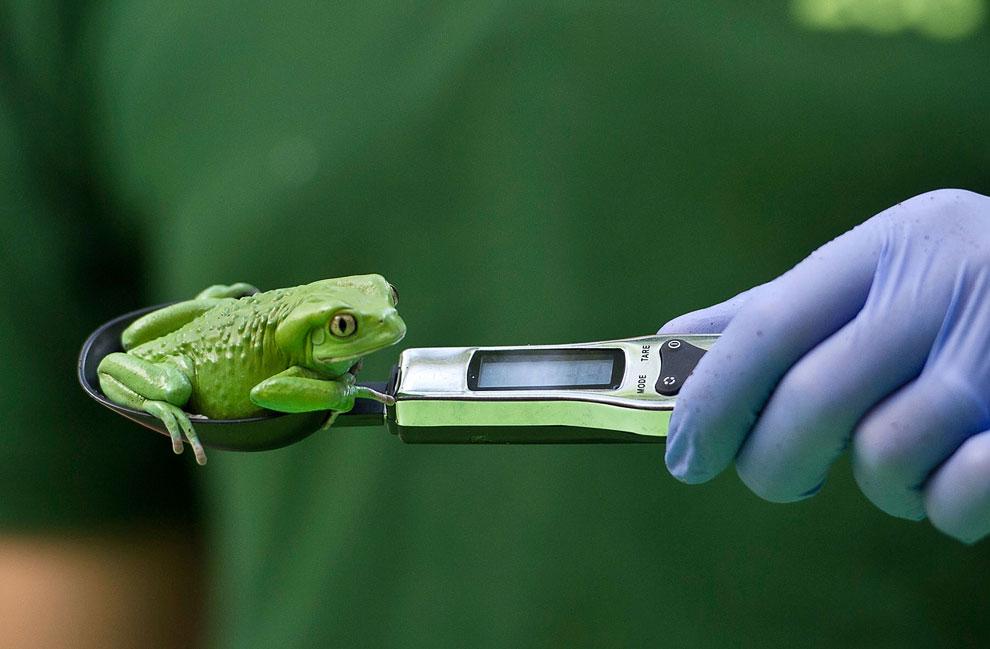 В лондонском зоопарке проходит инвентаризация