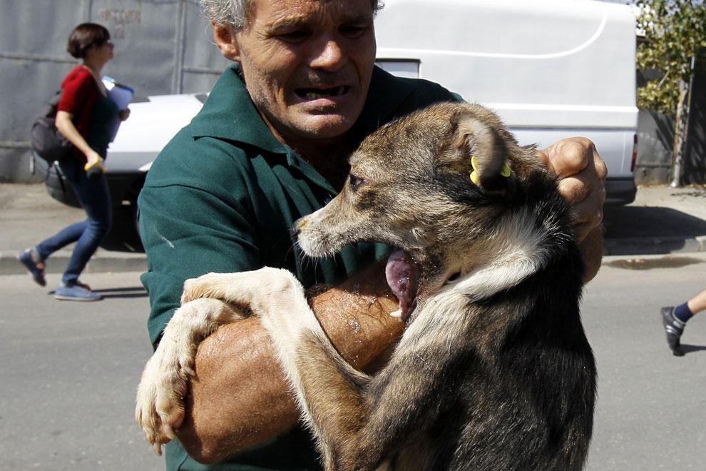 В Бухаресте расплодились бездомные собаки