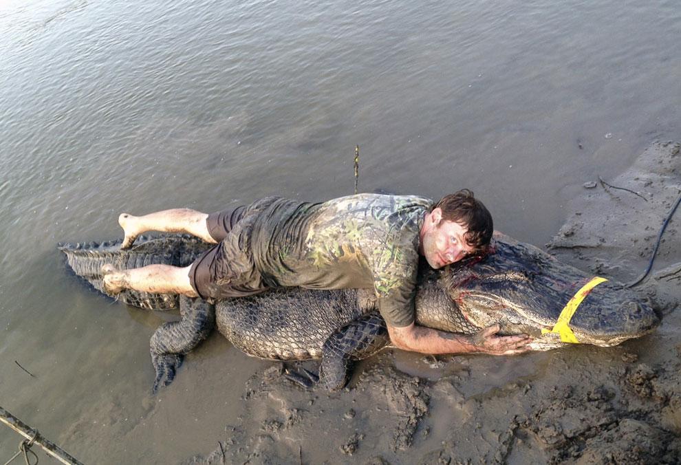 Здесь выловили большого аллигатора 396 см в дину и весом 330 кг