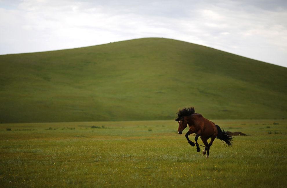 Тренировка лошади для скачек на лугах в 70 км от монгольского города Улан-Батор