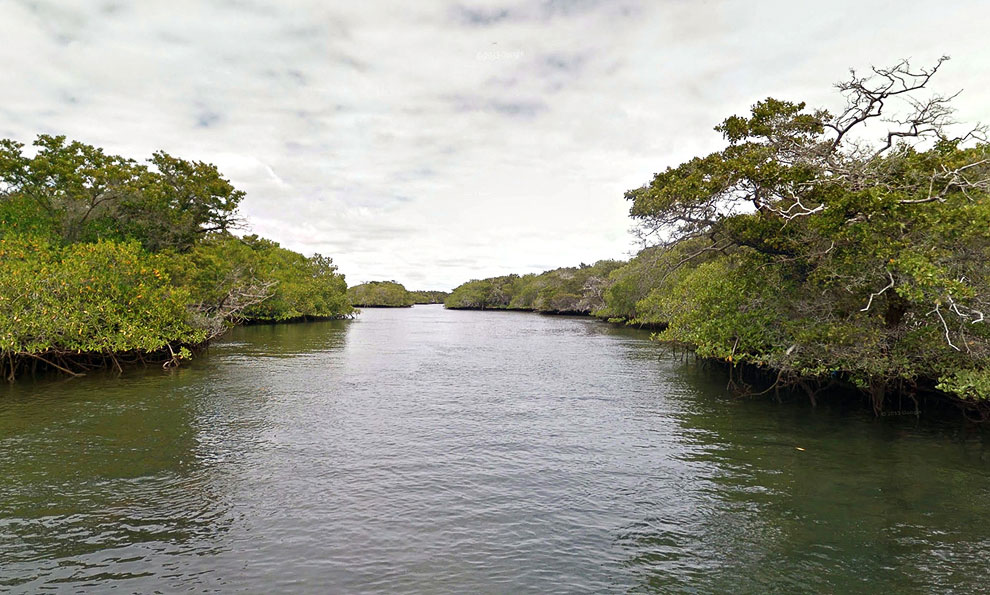 Мангровые леса на острове Изабелла