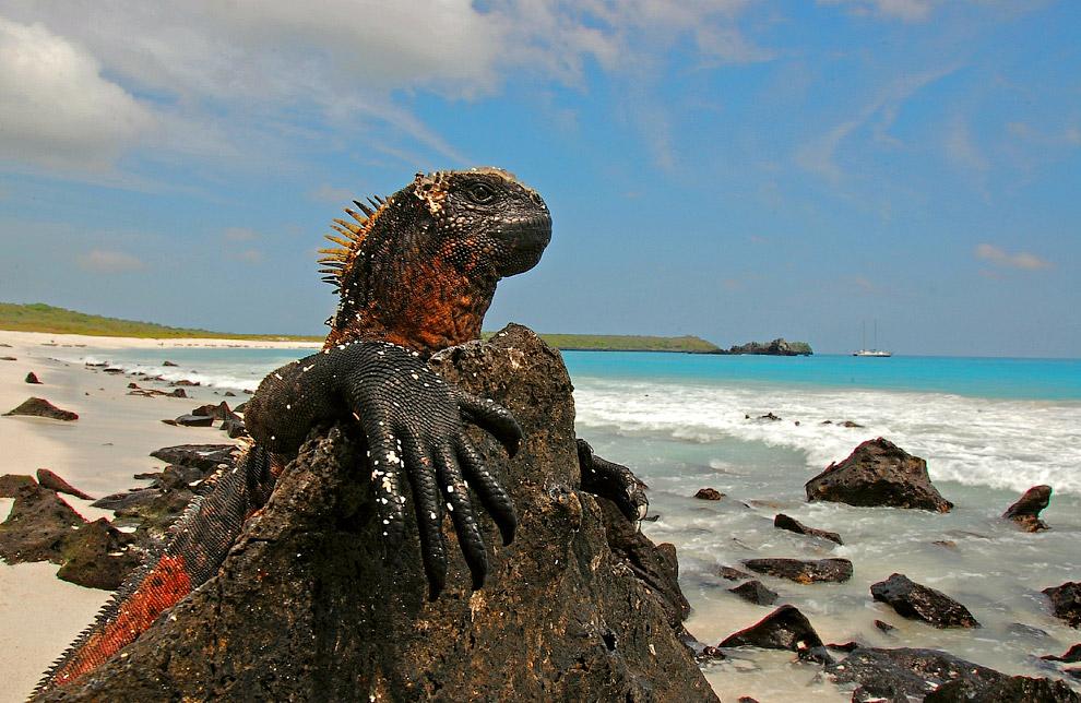 Прощайте, Галапагосские острова и их обитатели