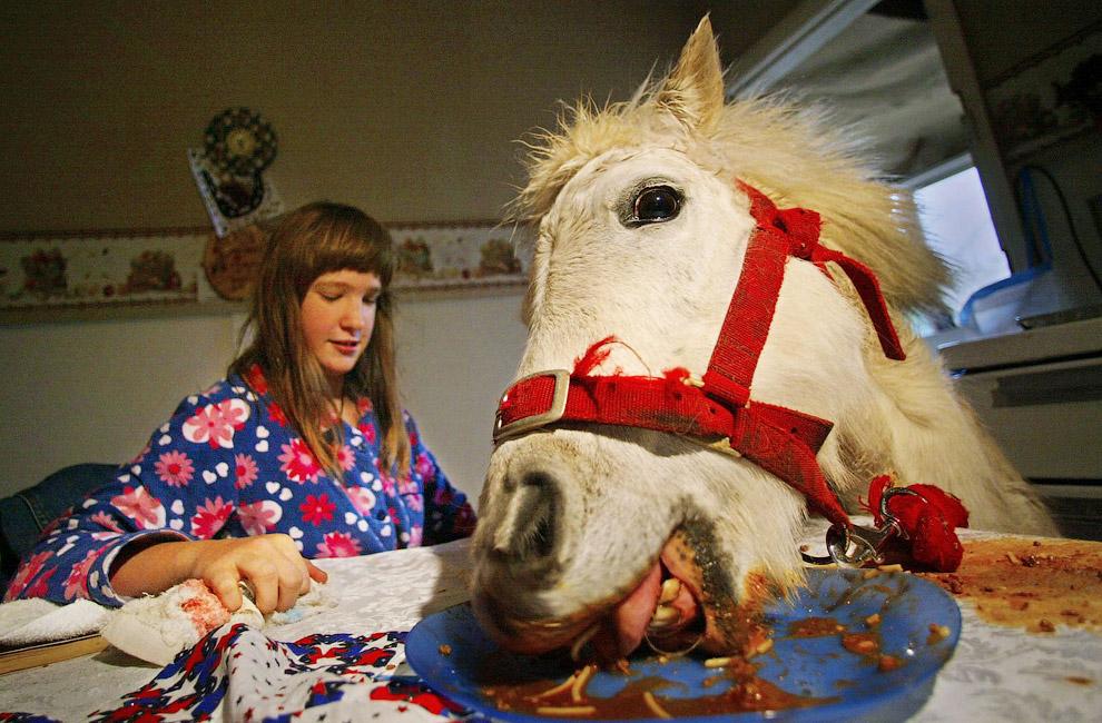 Обед у лошади по кличке Принцесса