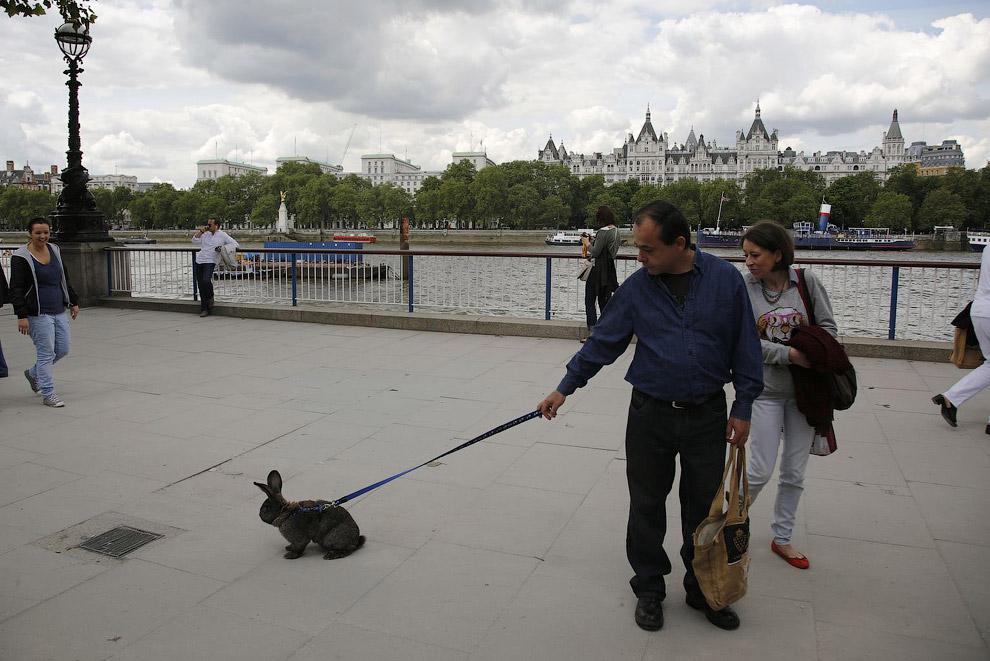 Домашний кролик на берегу Темзы в Лондоне