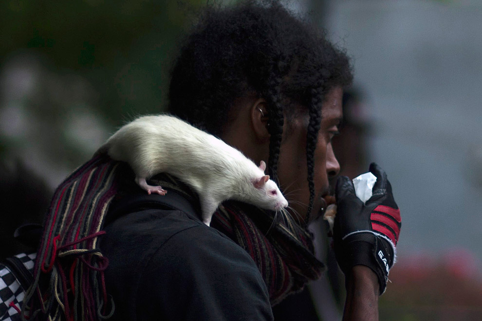 Домашняя крыса с хозяином на улице в Нью-Йорке
