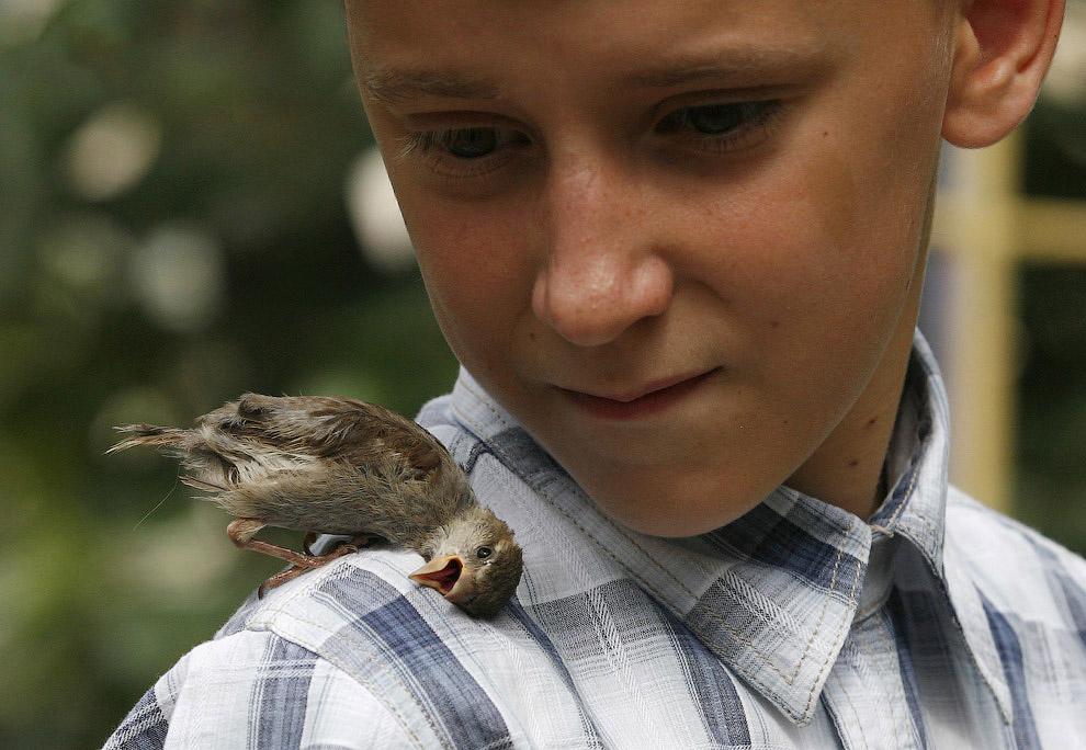 В июне 2013-го мальчик из Дудинки приехал в гости к бабушке в Минусинск и подобрал там маленькую воробьиху