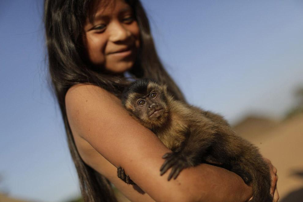 Домашняя обезьянка