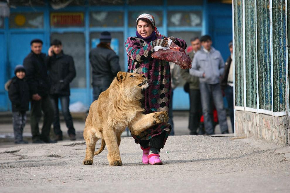 Сотрудница зоопарка Зухра на прогулке с 18-месячным львенком Вадиком в столице Душанбе