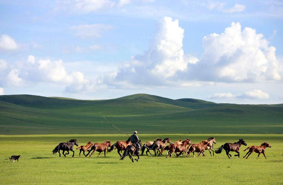 Стадо лошадей в районе Внутренняя Монголия в Китае