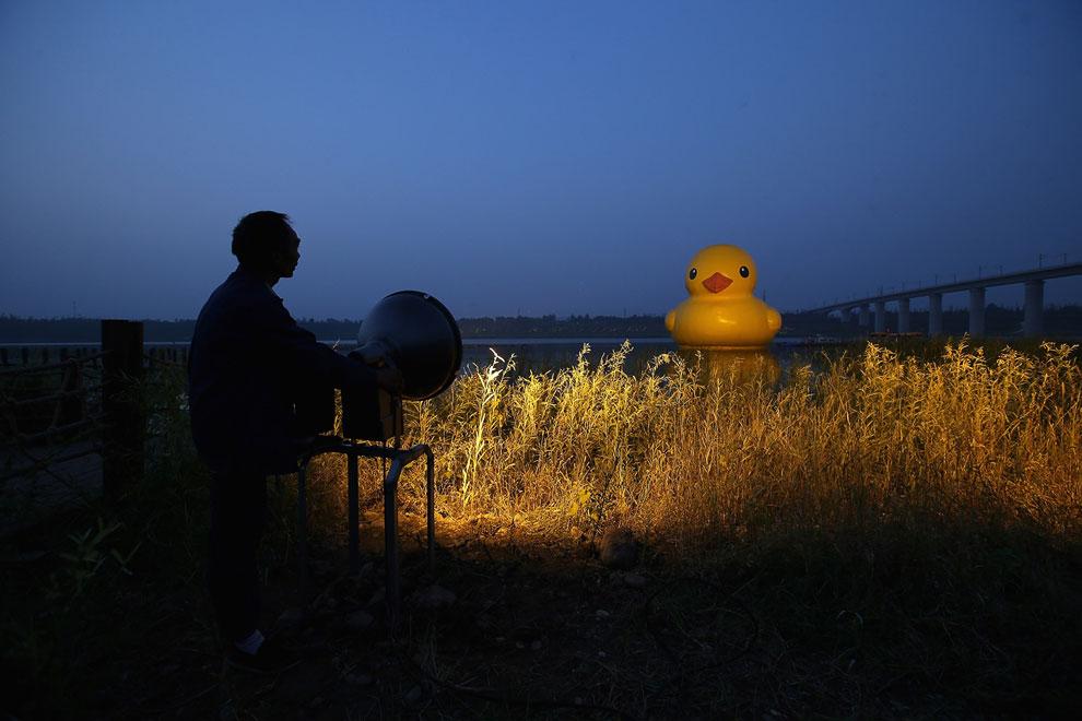 18-метровая «Резиновая утка» была изготовлена голландским художником Флорентином Хофманом