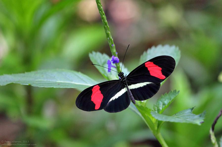 Животный мир Коста-Рики