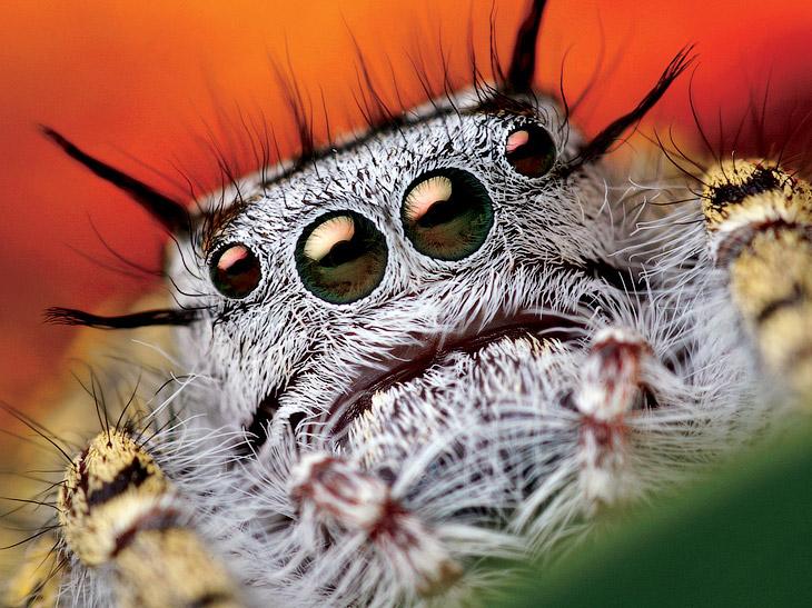 National Geographic: лучшие фотографии сентября