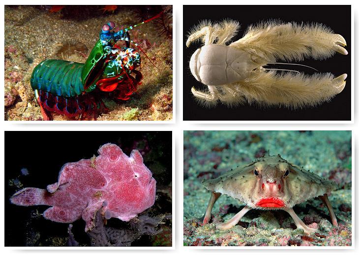 12 удивительных морских существ