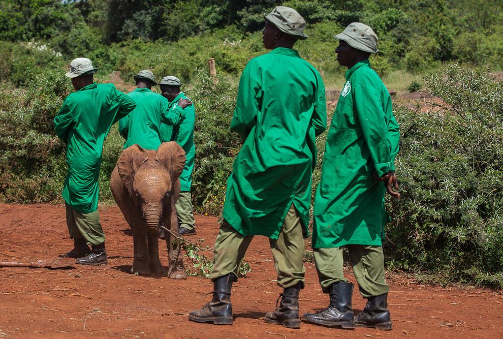 Слоновий приют в Кении