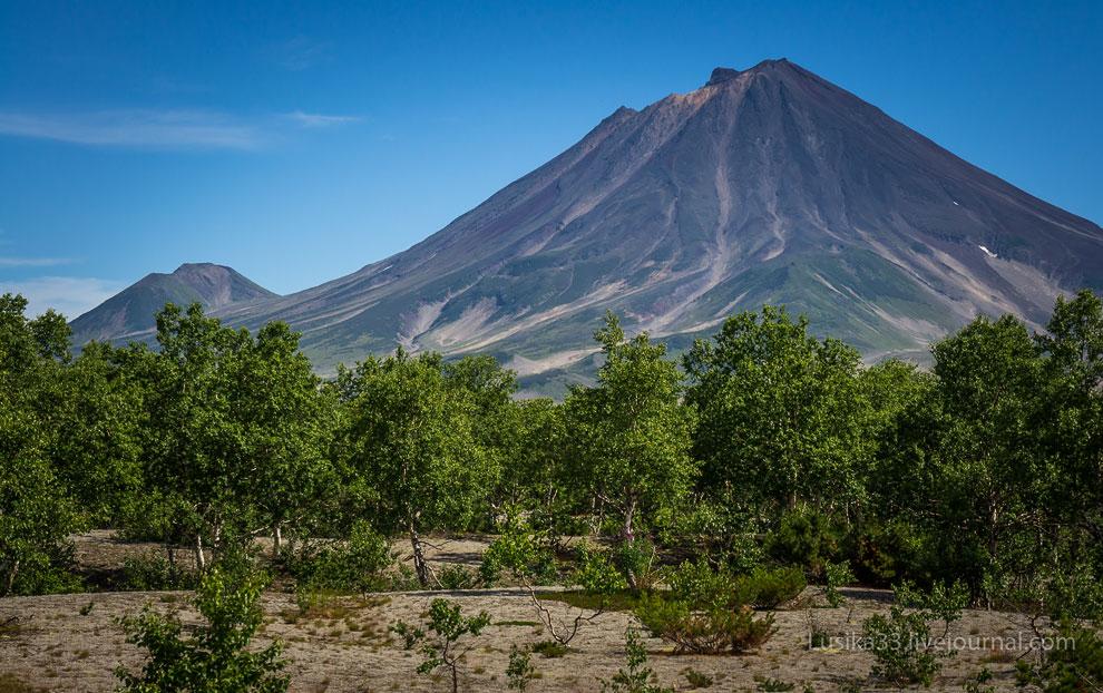 Ходутка — потенциально активный стратовулкан на Камчатке и Приемыш — потухший вулкан