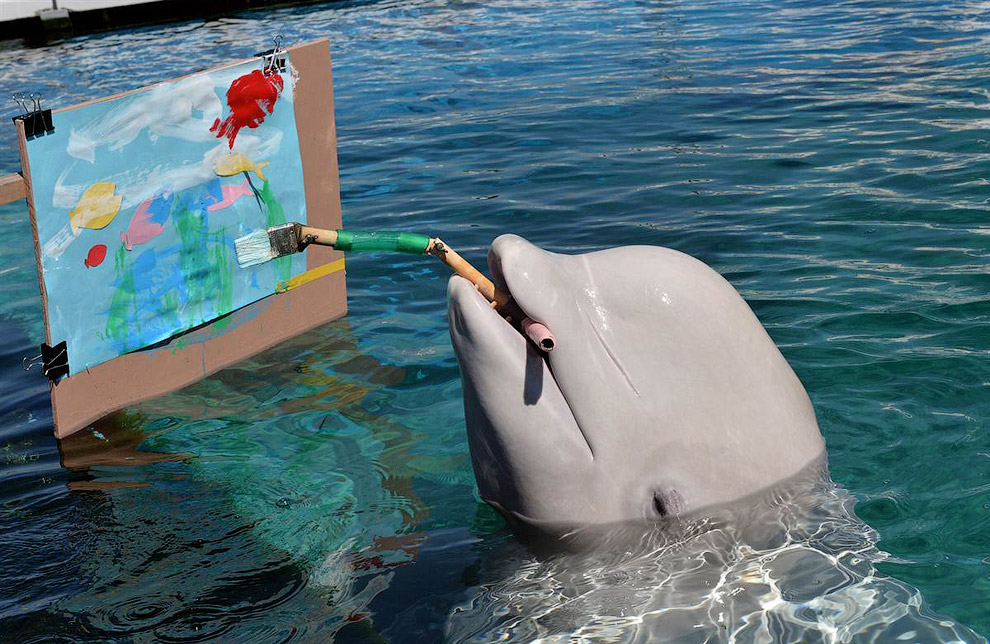 Белуха рисует замысловатую картину в аквариуме в Токио