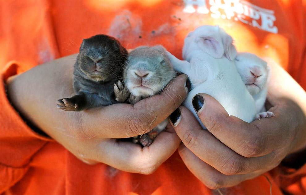 Маленькие кролики, штат Пенсильвания