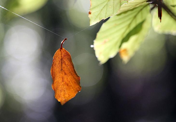 Осенние пейзажи 2013