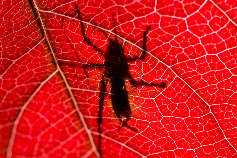 Какое-то насекомое на осеннем листе