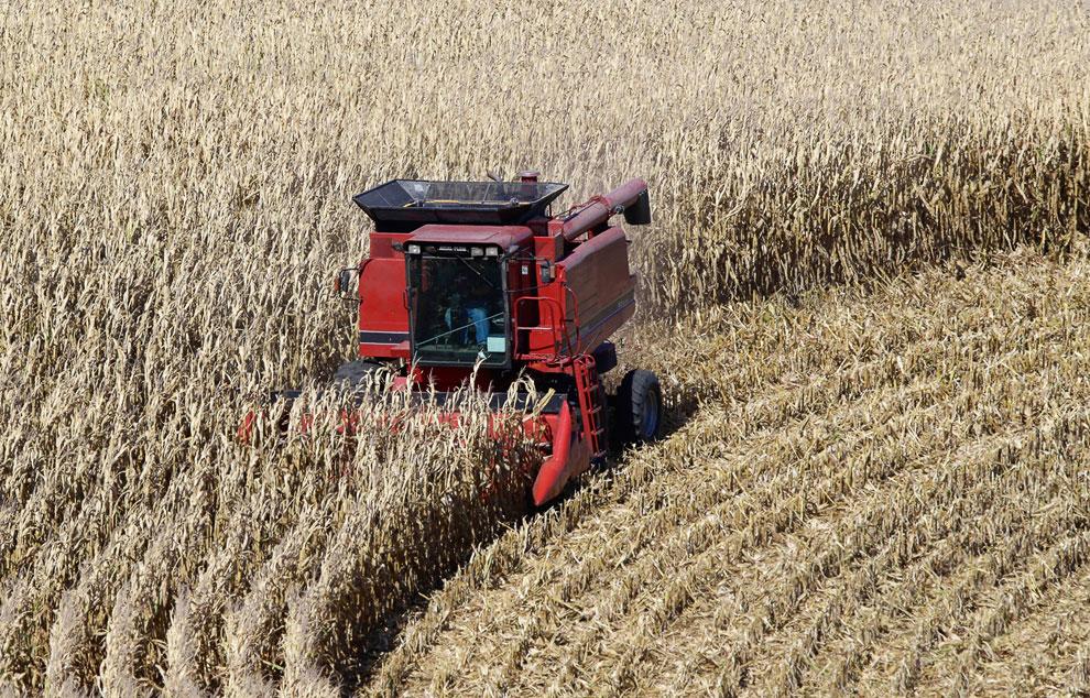 Сбор урожая кукурузы в Форт Калхуне, штат Небраска